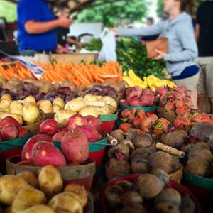 Farm Markets and Orchards